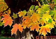 秋风中的一曲《枫》——裴先生的本田雅阁改装方案